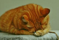 고양이 사료 추천